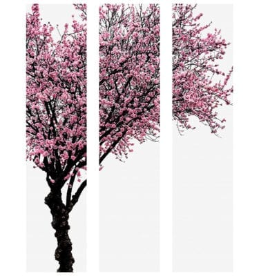 Colour Tree P4001F64 3 Panel Wall Art